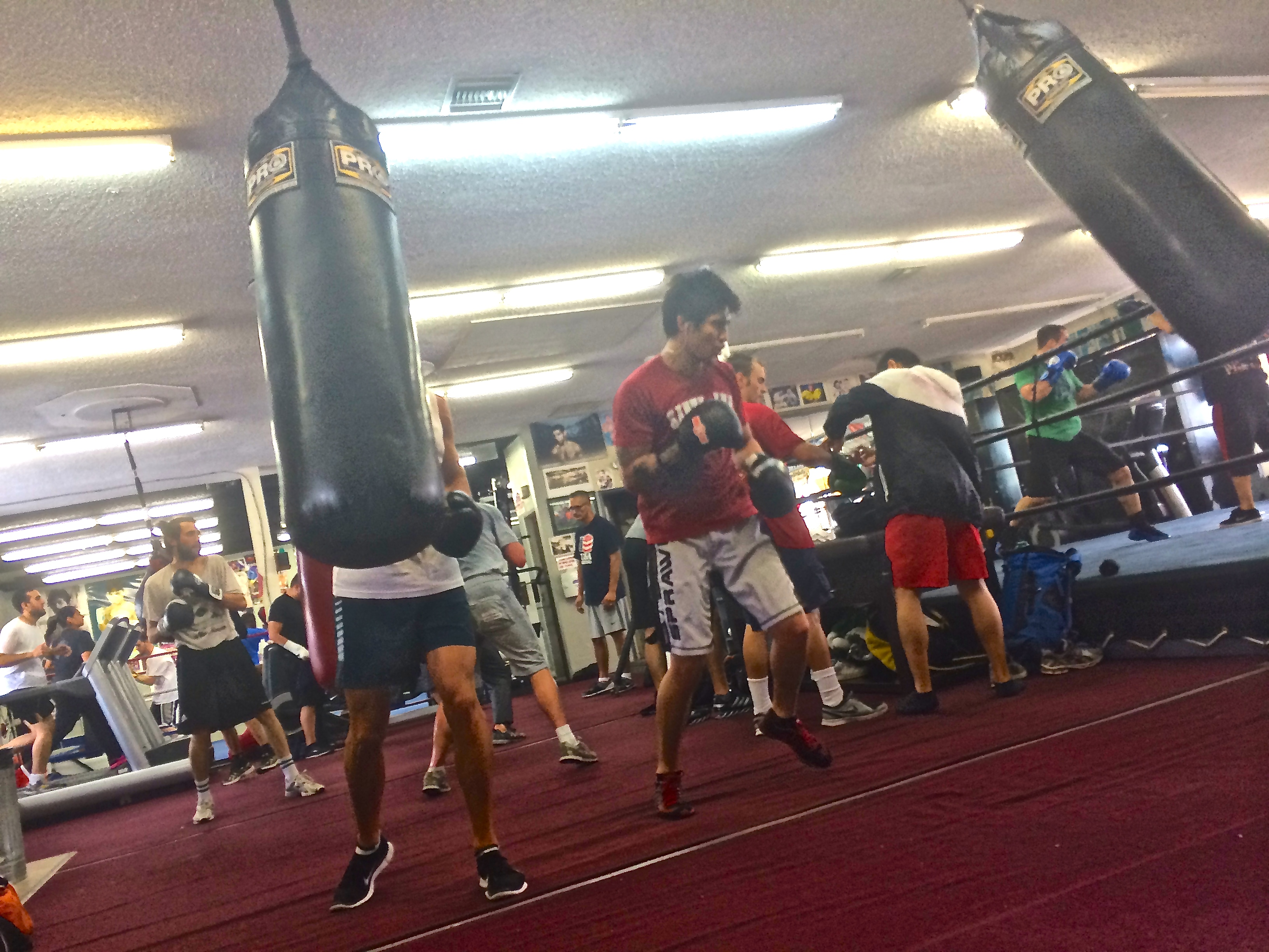 PHOTOS: A Day @ Wild Card Gym | blood money boxing